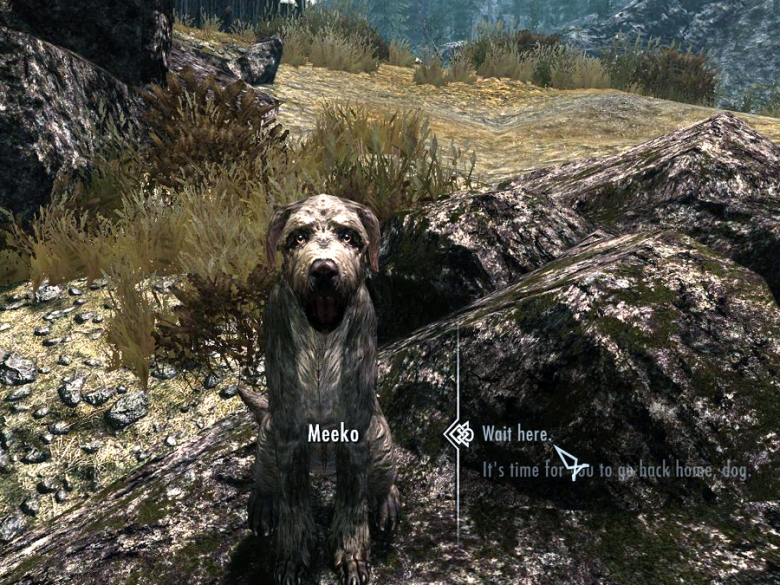Sit Meeko sit, good dog!