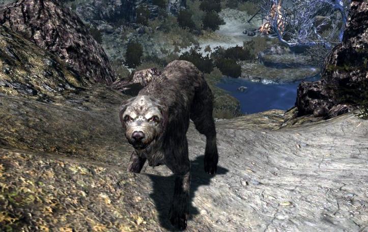 Very bad dog!